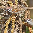 Pair Of Tree Sparrows by Robert Abraham