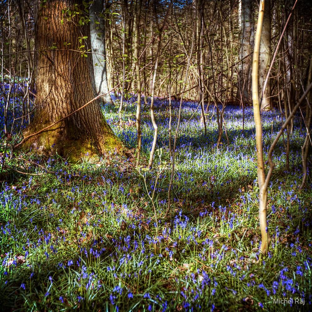 Forest Blues by Michel Raj