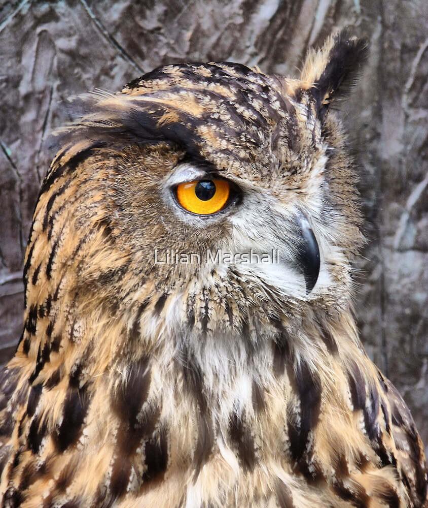 Eurasian Eagle Owl. by Lilian Marshall