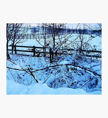 Snow Covered Brambles! Photographic Print