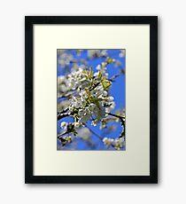 backtorn blossom Eire Framed Print