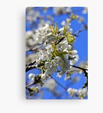 backtorn blossom Eire Canvas Print