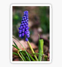 Grape Hyacinth Wildflower Sticker