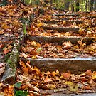 Autumn Steps by Jeff VanDyke