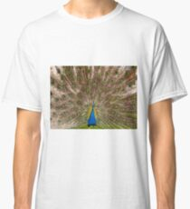 Peacock display colourful tail Classic T-Shirt