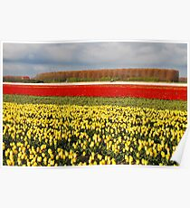 Tulips from Flakkee..... Poster