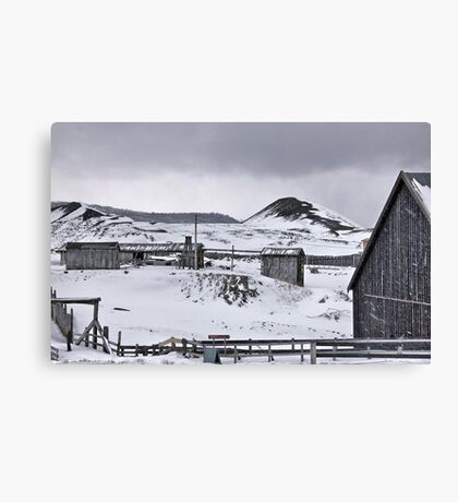 Beauty of the grey Canvas Print