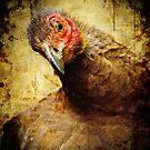 Wild Turkey by Emma  Gilette
