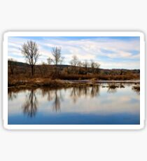 Trees on Tranquil Lake Sticker