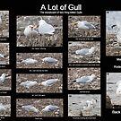 A Lot of Gull by DigitallyStill