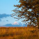 Typical South African Veld by Clive S