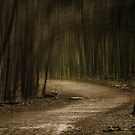 The Path We Follow by jules572