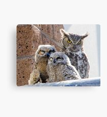 Horned Owl with Chicks Metal Print