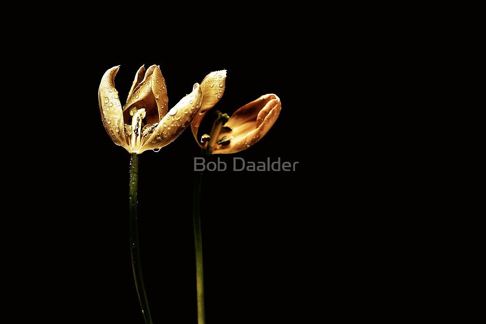 The end is near.... (color) by Bob Daalder