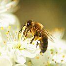 Blossom and Bee by Tamara Brandy