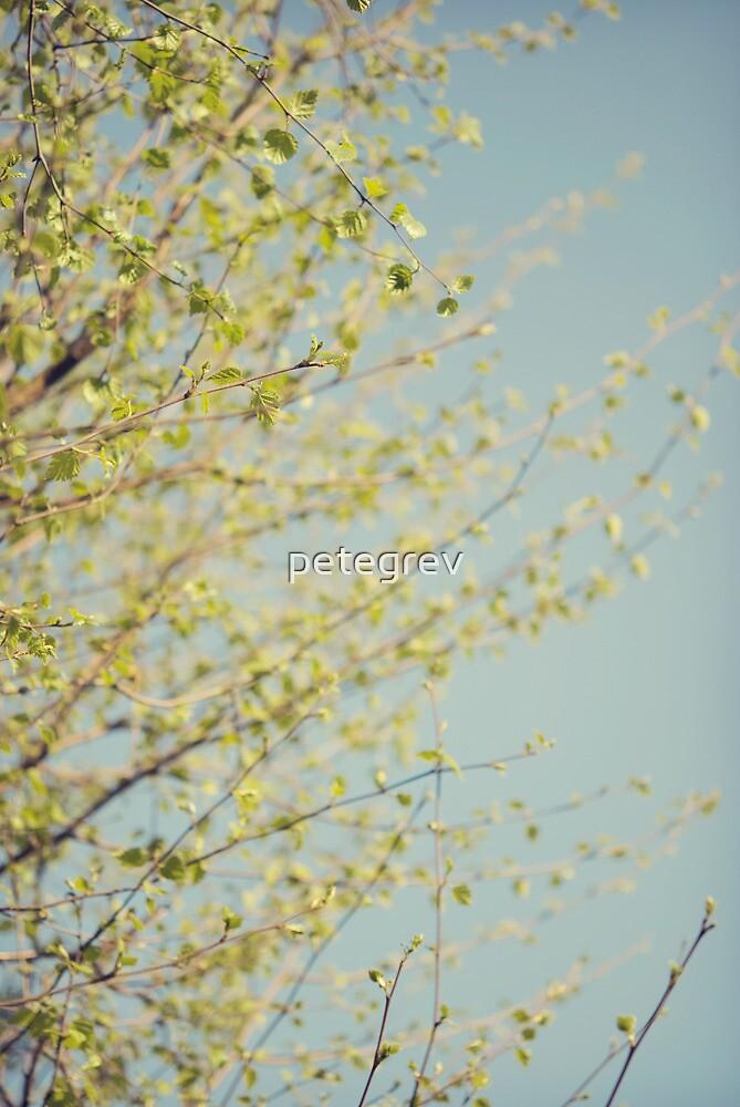 Day 289 - 24th April 2012 by petegrev