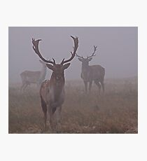 Dear In Mist Photographic Print