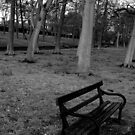 Valentine Park - A Bench by rsangsterkelly