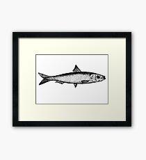 Sardine illustration Framed Print