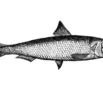Sardine illustration by artistgoran