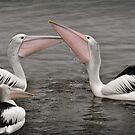 Big Beaks by Peter Hammer