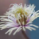 lost petals by katpartridge