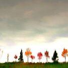 autumnal impression.. by JOSEPHMAZZUCCO