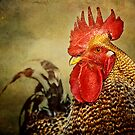 Portrait of a Rooster by Laura Palazzolo