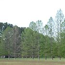 Family of Trees by Barry Elkins