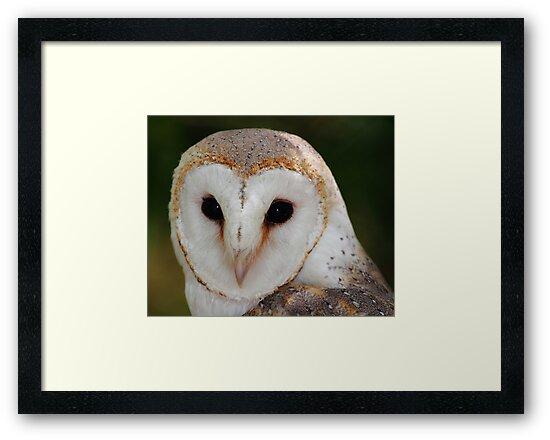 """Wise Owl"" by jonxiv"