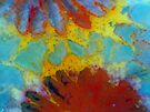 Floral Coral 2 by Stephanie Bateman-Graham