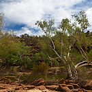Two Trees - Ross Graham Gorge by John Pitman