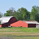 Two Red Barns and a Gray Shed by mltrue