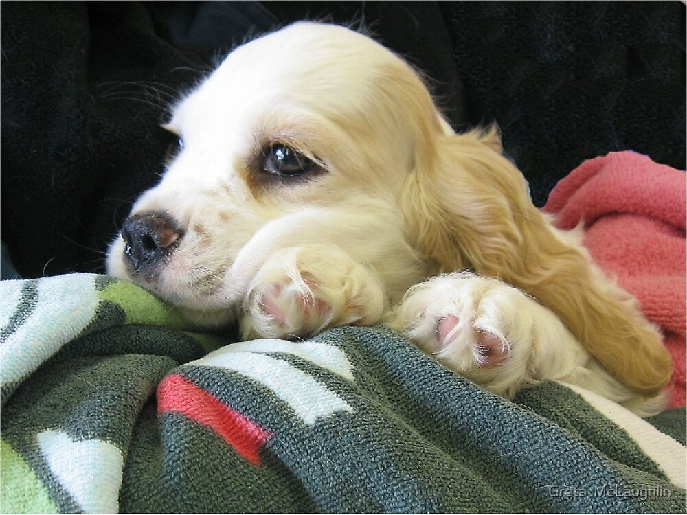Puppy Love by Greta  McLaughlin
