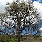 Majestic oak tree by Maria1606