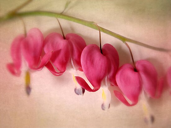 Bleeding Hearts by Jessica Jenney