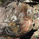 Rock Paintings Photograph by AHakir