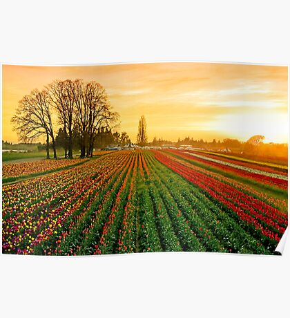 Dusk At The Wooden Shoe Poster