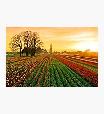 Dusk At The Wooden Shoe Photographic Print