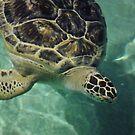 Turtle Turtle by Robin Black