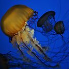 Jellyfish by Robin Black