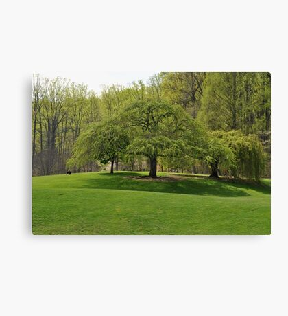 Weeping Willow at the Gardens Canvas Print