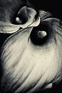Dark & Dangerous... by Bob Daalder