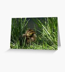 Mallard Duck Duckling Greeting Card