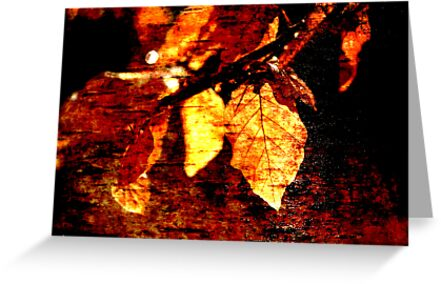 Leaf and Light Abstract by Natalie Kinnear