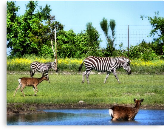 New Life ( Wild Life Preserve ) by Carla Jensen