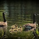 Family Outing by Karol Livote