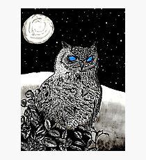 Spice Owl  Photographic Print