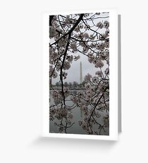 Cherry Blossoms in Washington DC Greeting Card