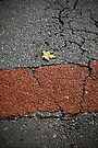 Leaf on road by Esther  Moliné